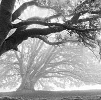 shadow-and-light-magazine-edgar-angelone-beyond-darkness-and-light-oak-trees